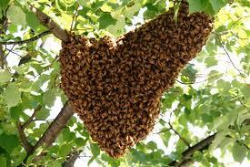 Bee warm in tree