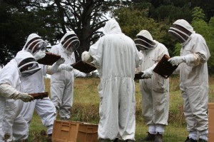 Students on beekeeping lesson with Alf